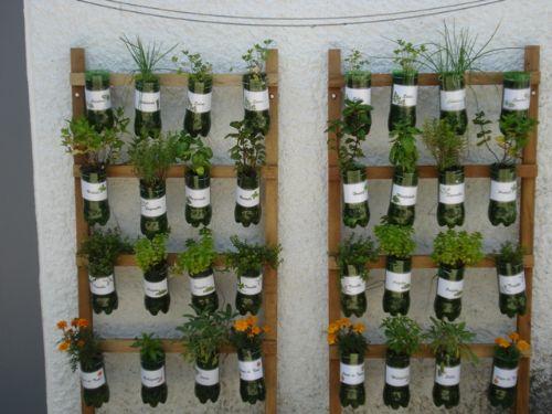 mini jardim ervas aromaticas : Os Pequenos Jornalistas: Hipertens?o e Ervas Arom?ticas